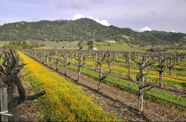 Wine tasting nearby with many Sonoma County wineries to choose from.